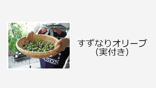 すずなりオリーブ(実付き)