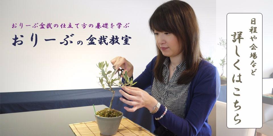 オリーブの盆栽教室