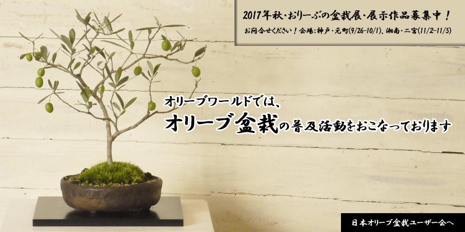 日本オリーブ盆栽ユーザー会