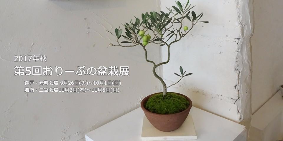 2017年おりーぶの盆栽展