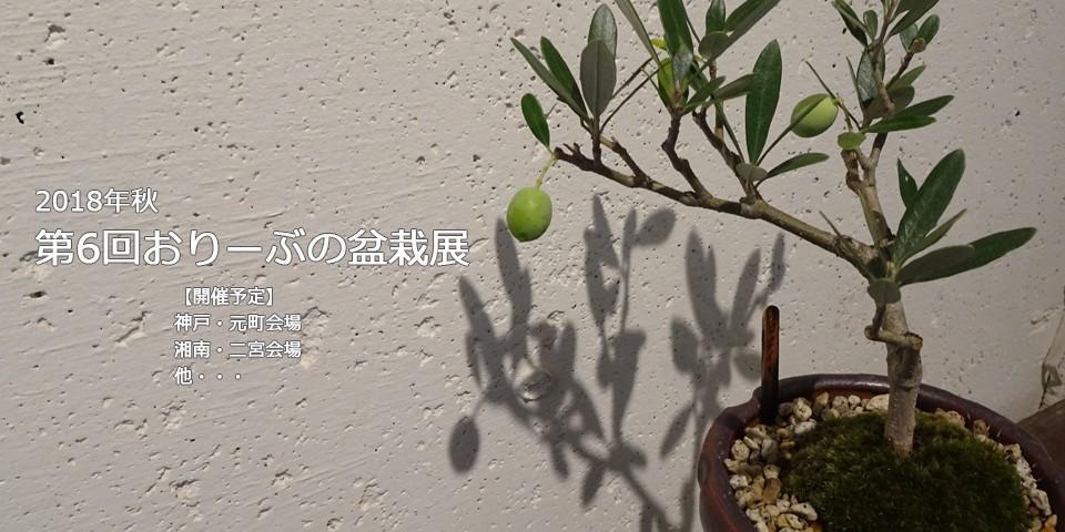 2018年おりーぶの盆栽展