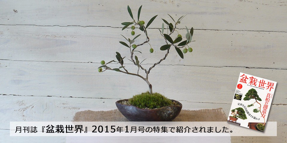 『盆栽世界』2015年1月号の特集で紹介されました