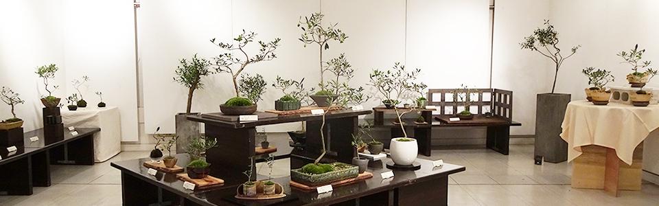 おりーぶの盆栽展