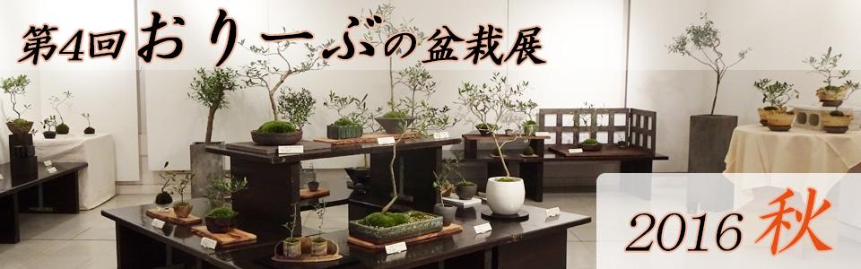 2016年第4回オリーブの盆栽展