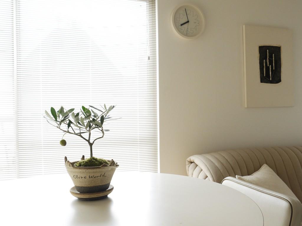 リビングのオリーブの盆栽