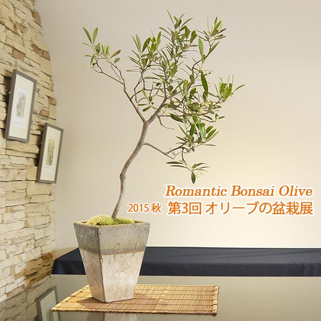Bonsai Olive 2015