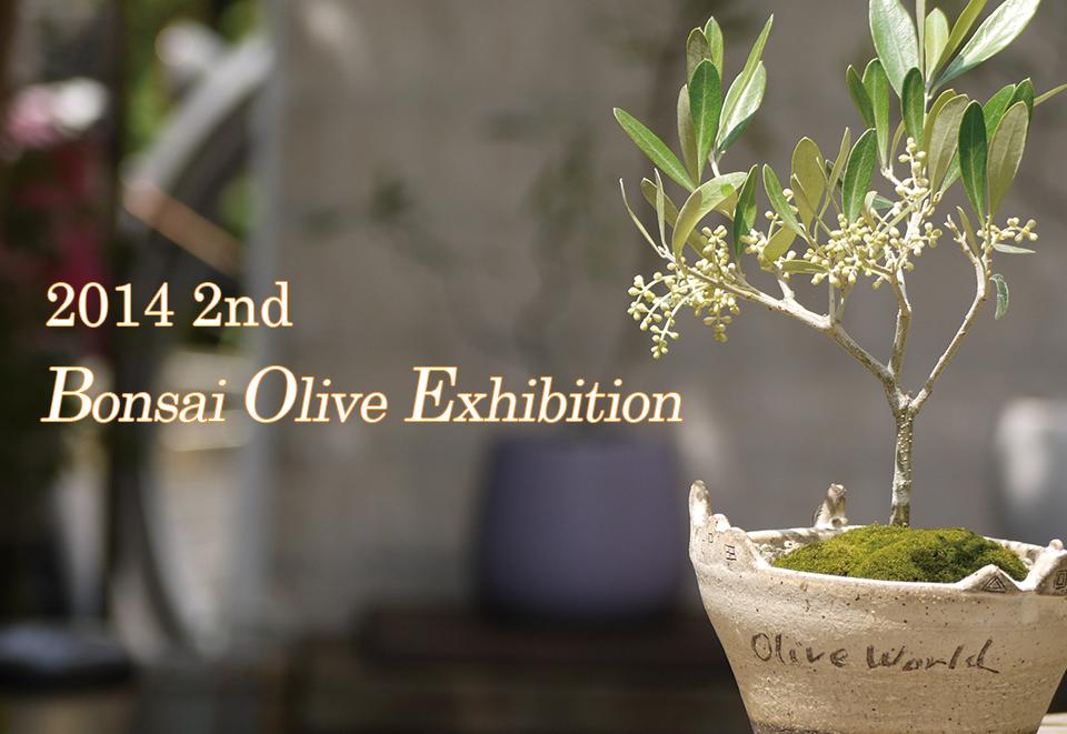 2014年・第2回オリーブの盆栽展