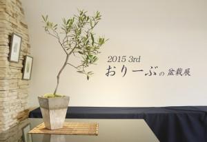 2015◆第3回オリーブの盆栽展