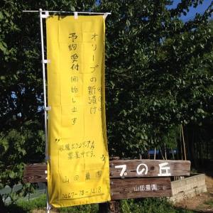 神奈川県綾瀬市でオリーブ栽培を行っている山田農園