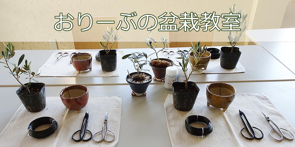 おりーぶの盆栽教室