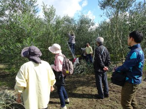 小豆島オリーブ収穫祭・小豆島岬工房