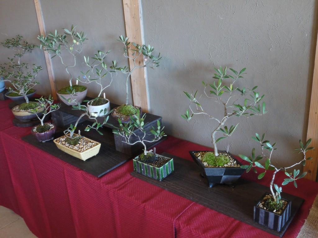 第5回おりーぶの盆栽展・湘南 二宮会場