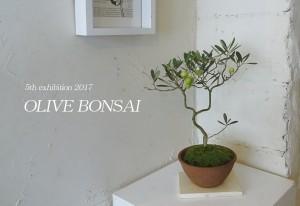 2017◆第5回オリーブの盆栽展